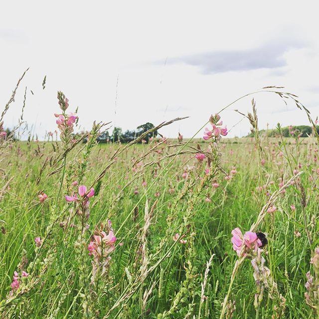 Quite the cutting garden #wildflowers #britishflowers #bees