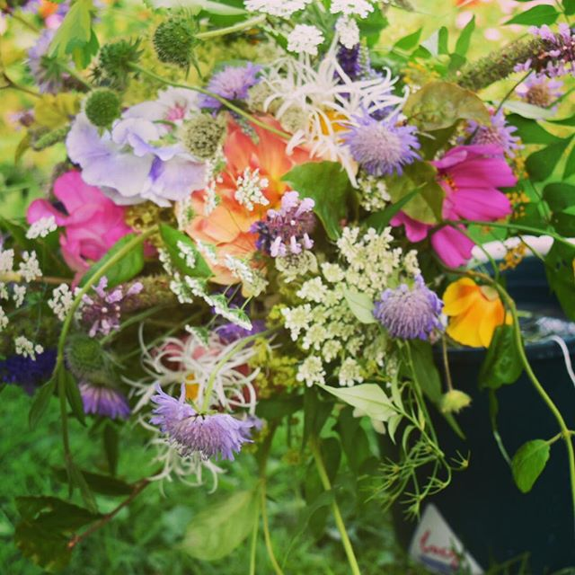 Its a wild one.. #wildflowers #britishflowers #weddingflowers #flowerfarming