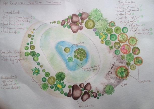 Wildlife pond design in Topcroft, Norfolk. Using native pond plants and a hibernaculum mound area.