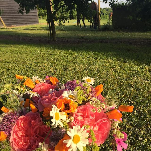 Flowers, ponies, high ash sunsets 🌅 🐴 #cutflowers #garden #britishflowers #ponies #norfolk