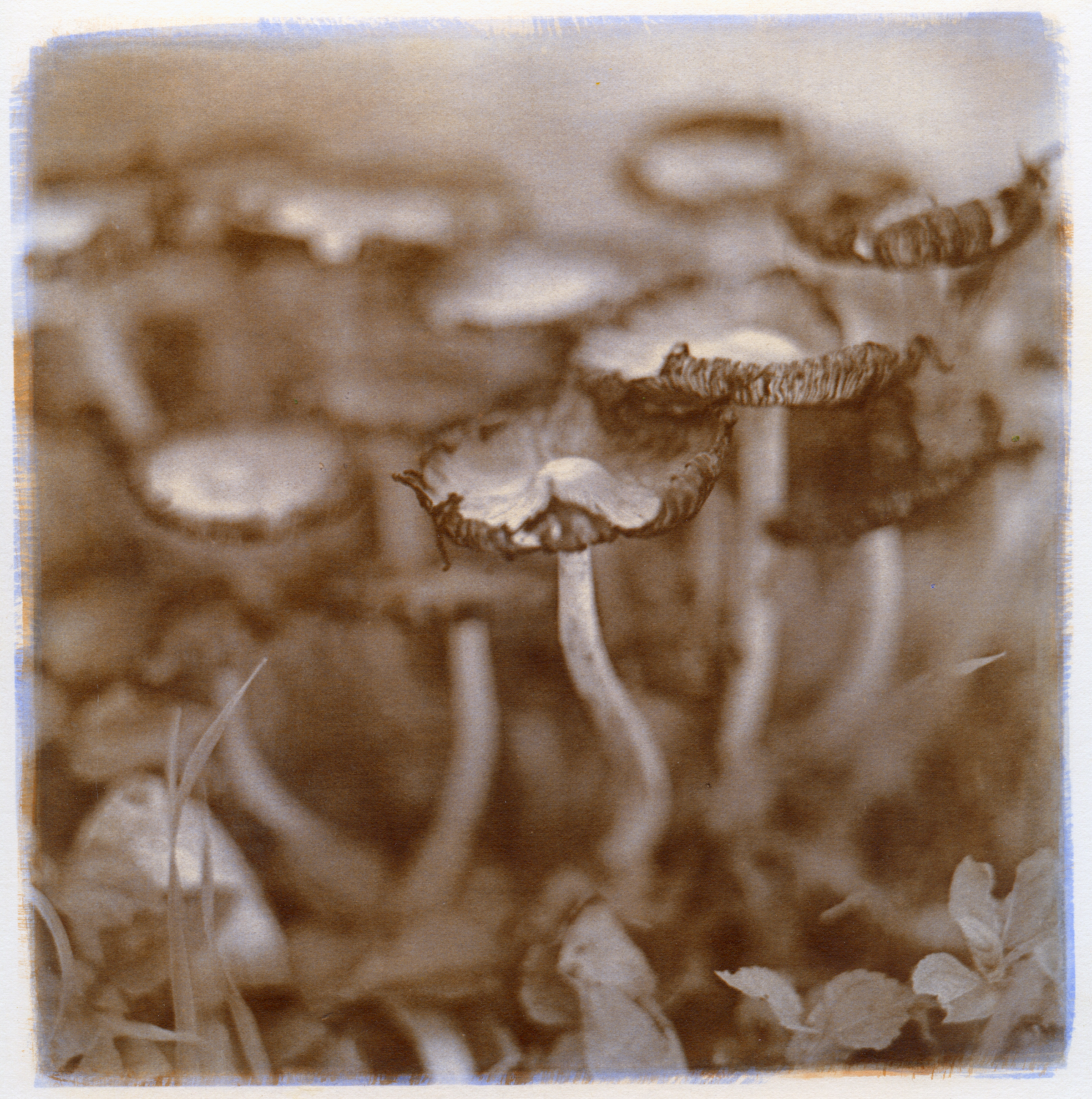 Mushrooms, 2014