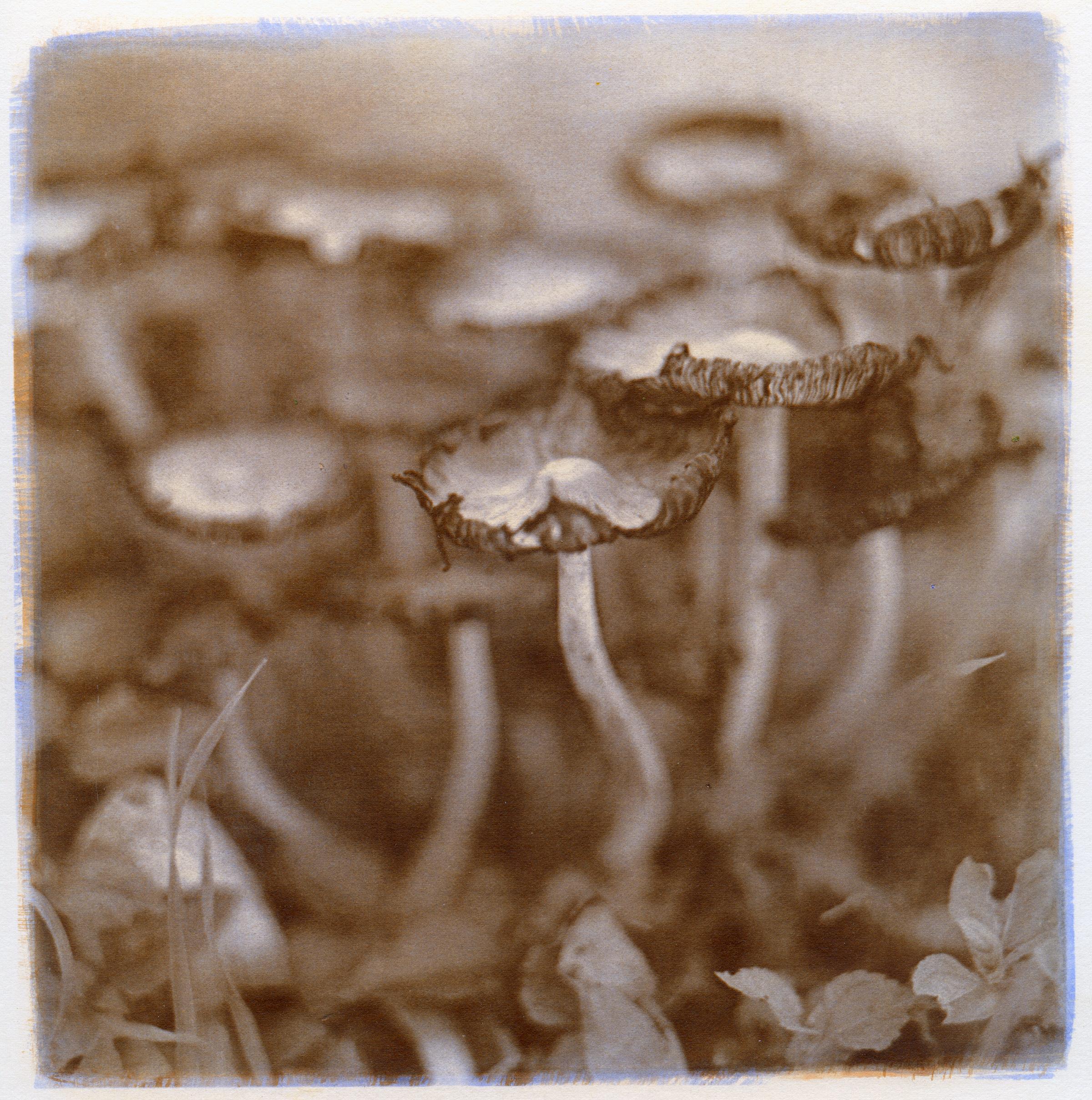 Mushrooms, 2014