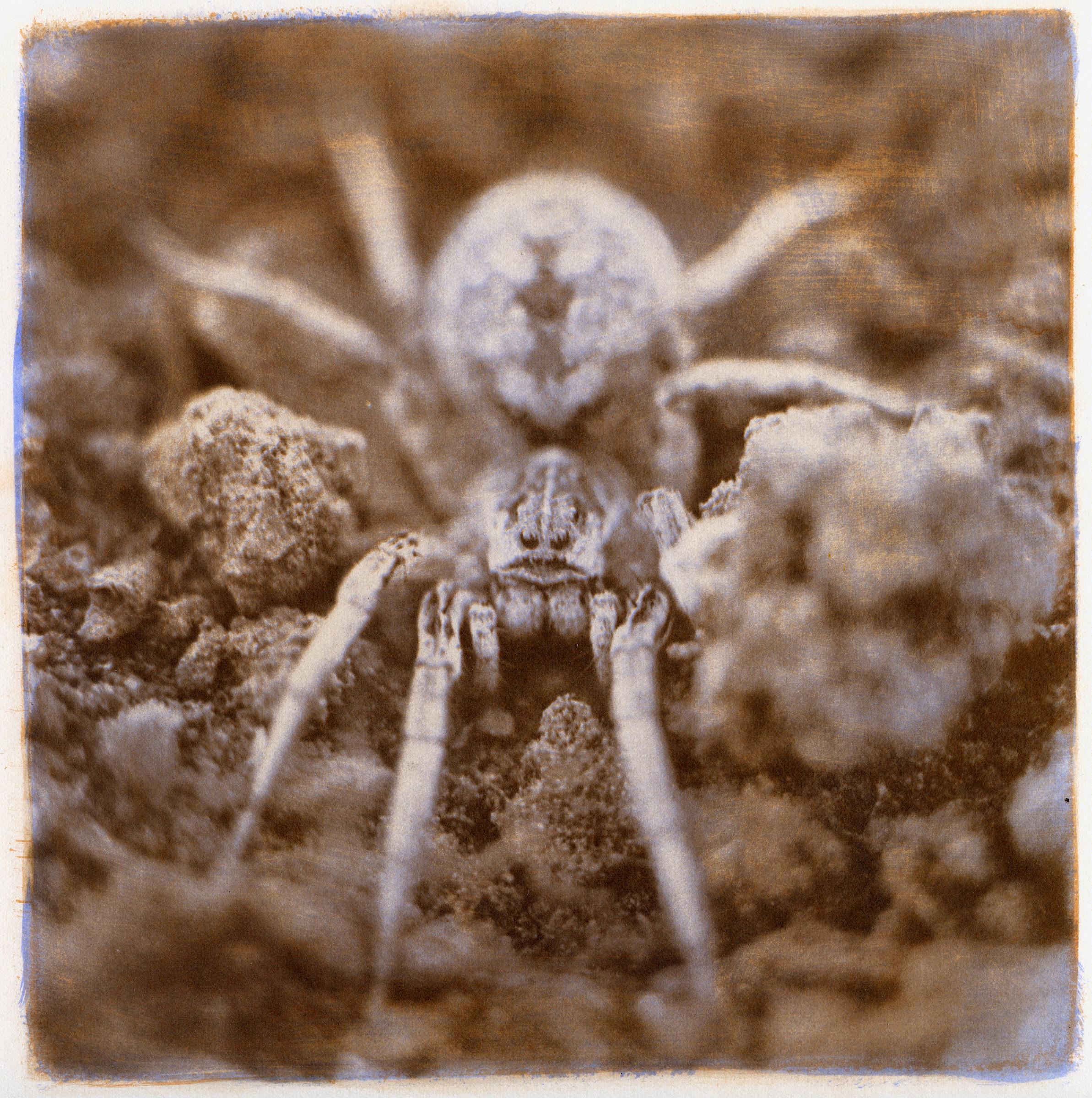 Wolf Spider, 2014