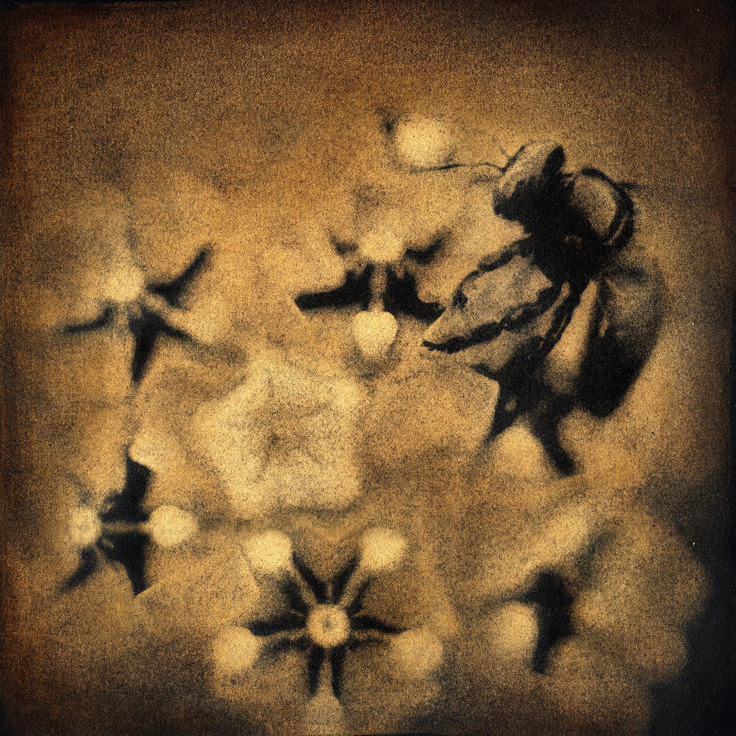 Bee on Antelope Horn, 2005
