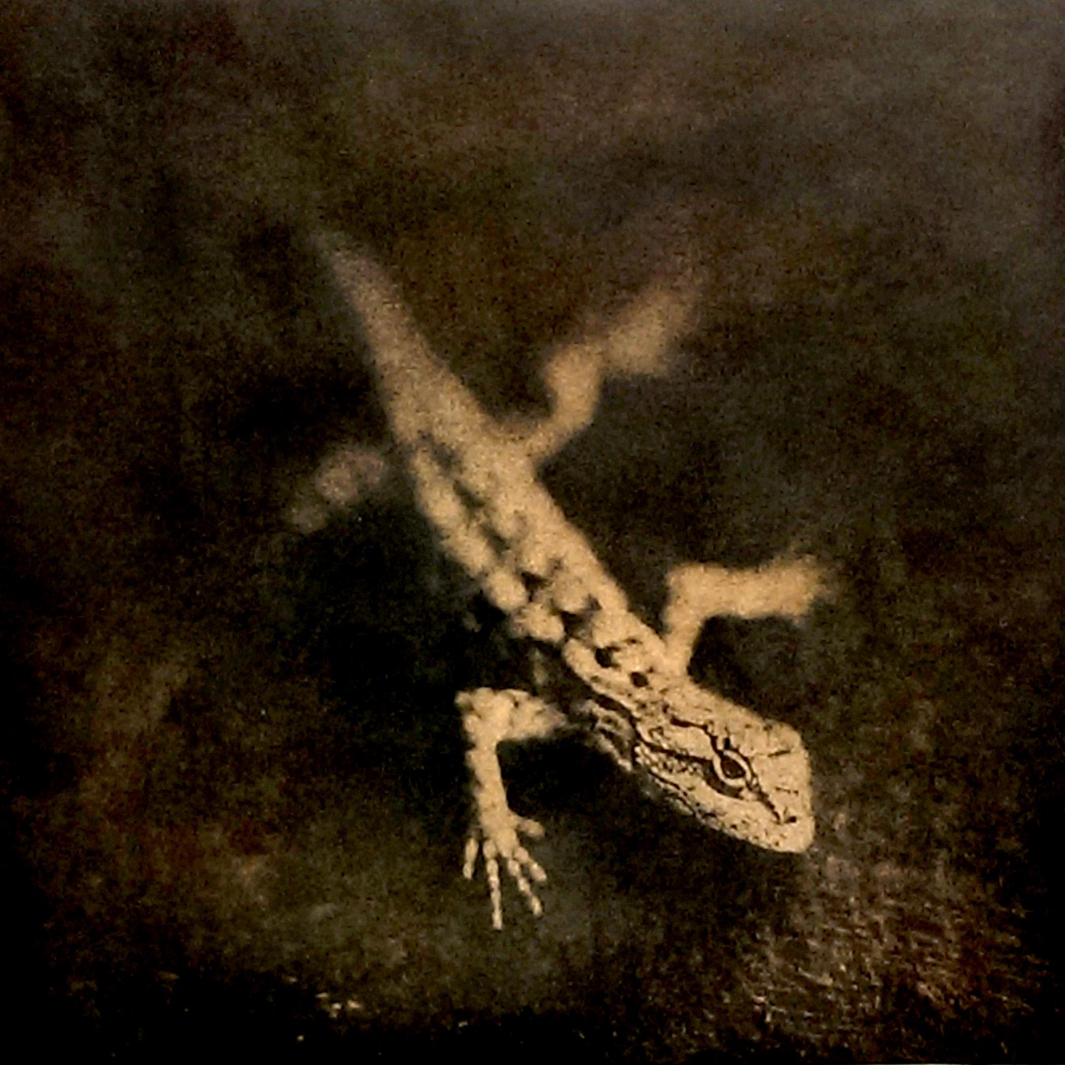 Texas Spiny Lizard, 2015