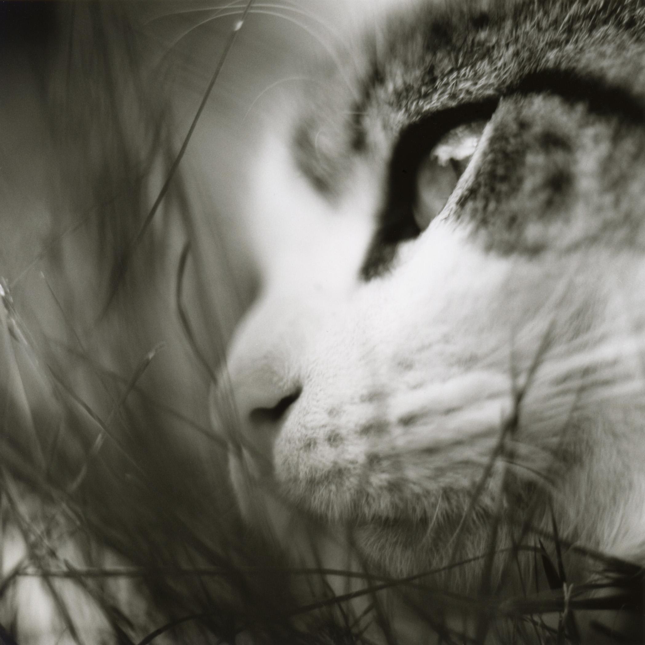 Cat (Leggy), 2004