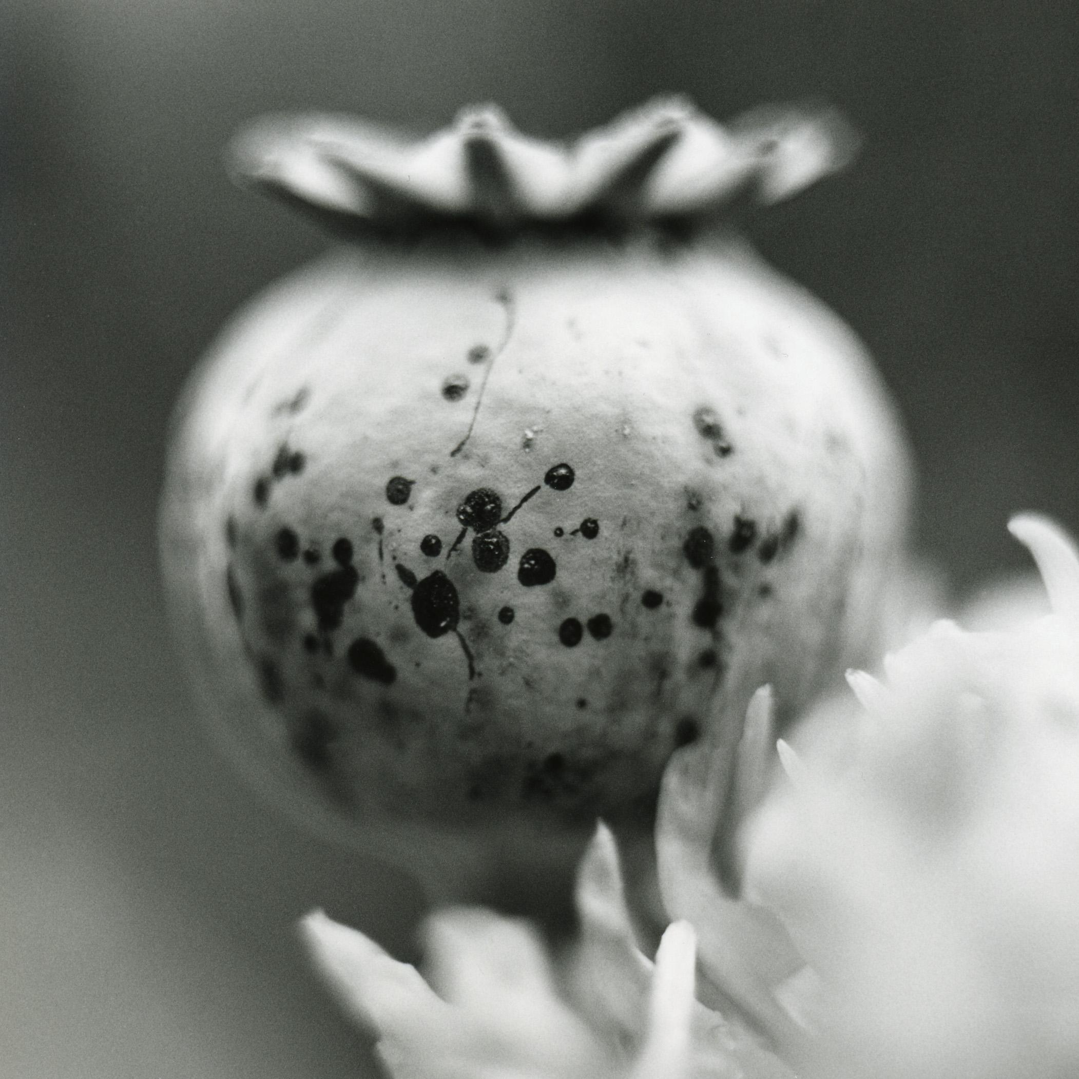 Opium, 2004