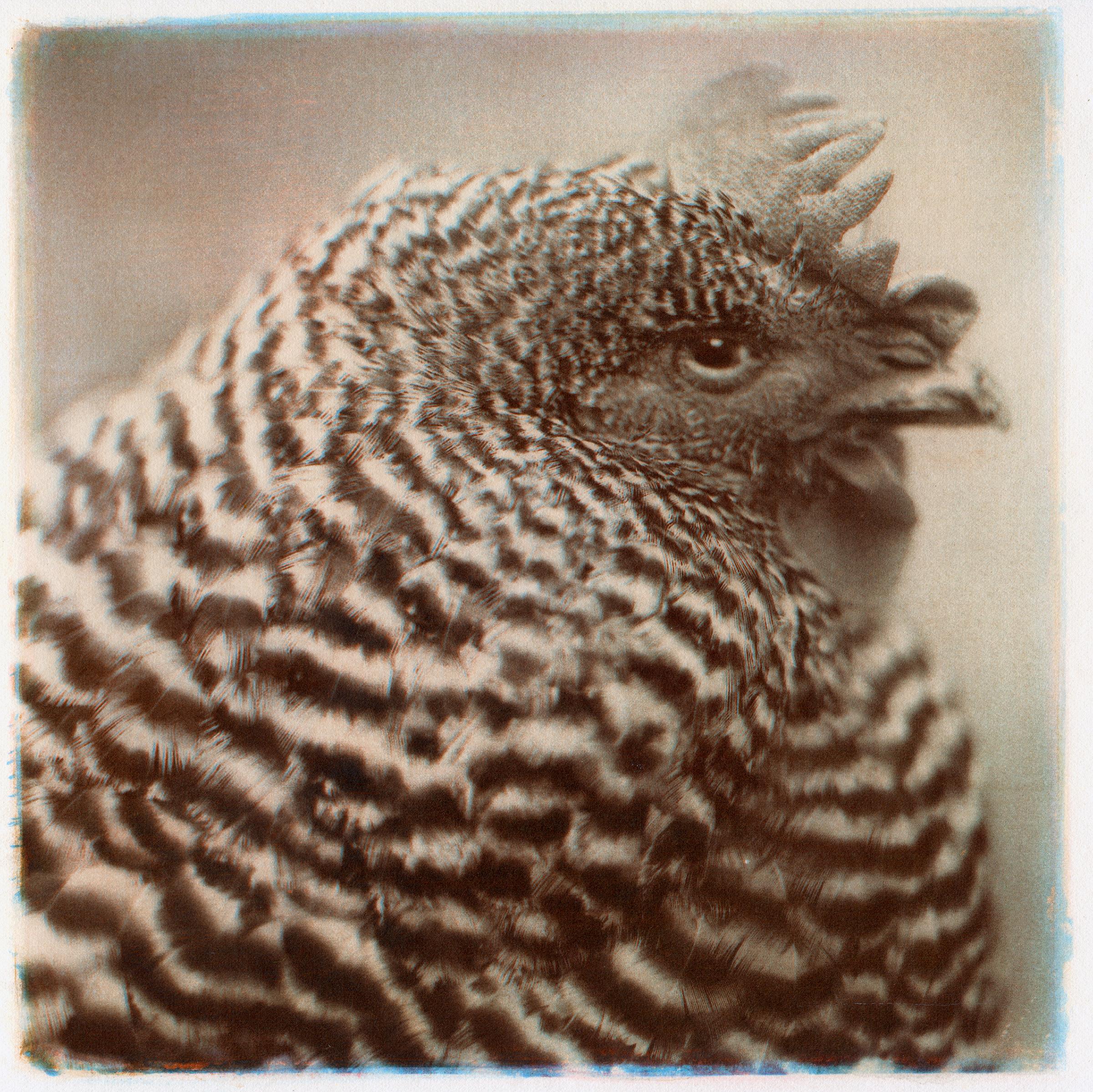 hen,2014.jpg