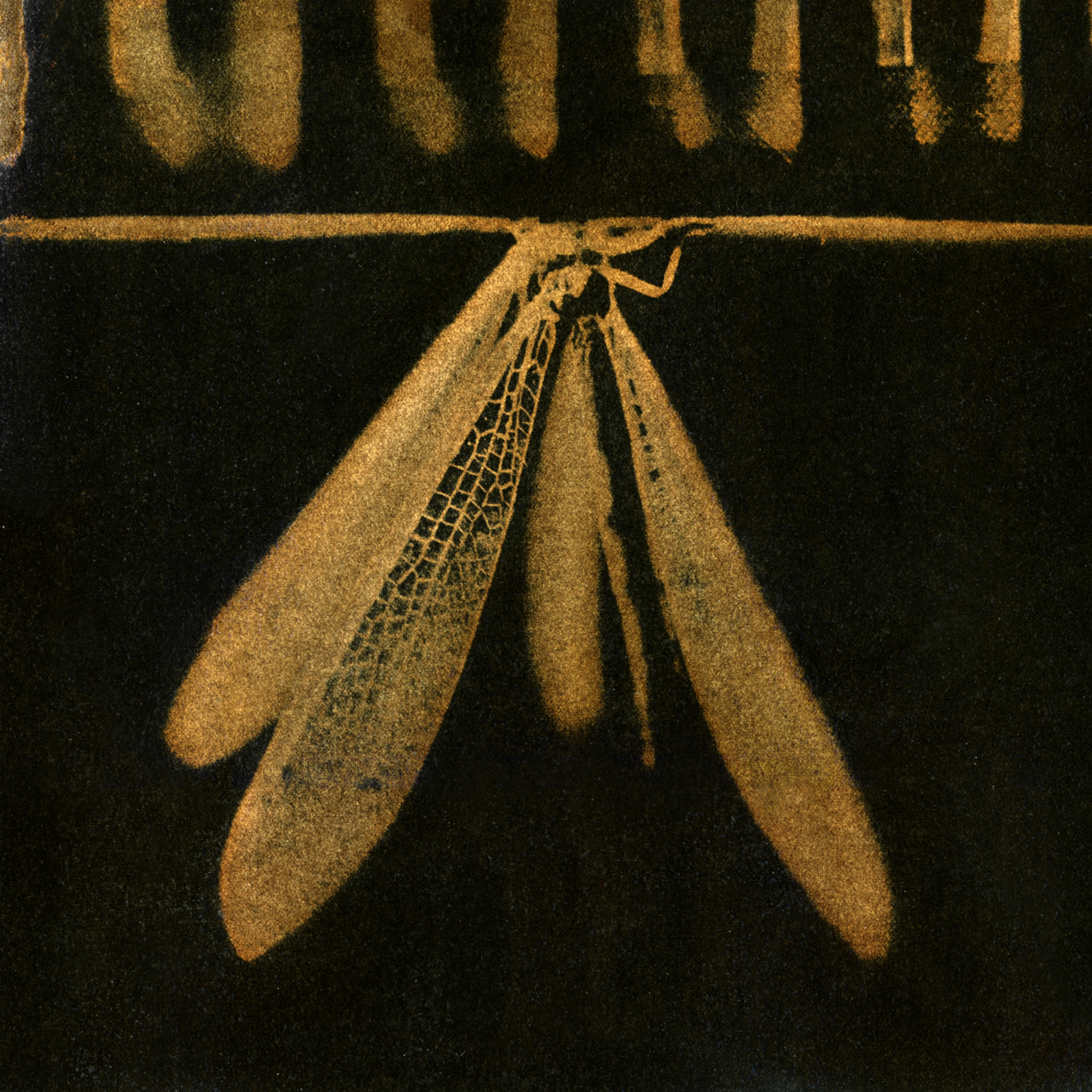 Lacewing, 2007