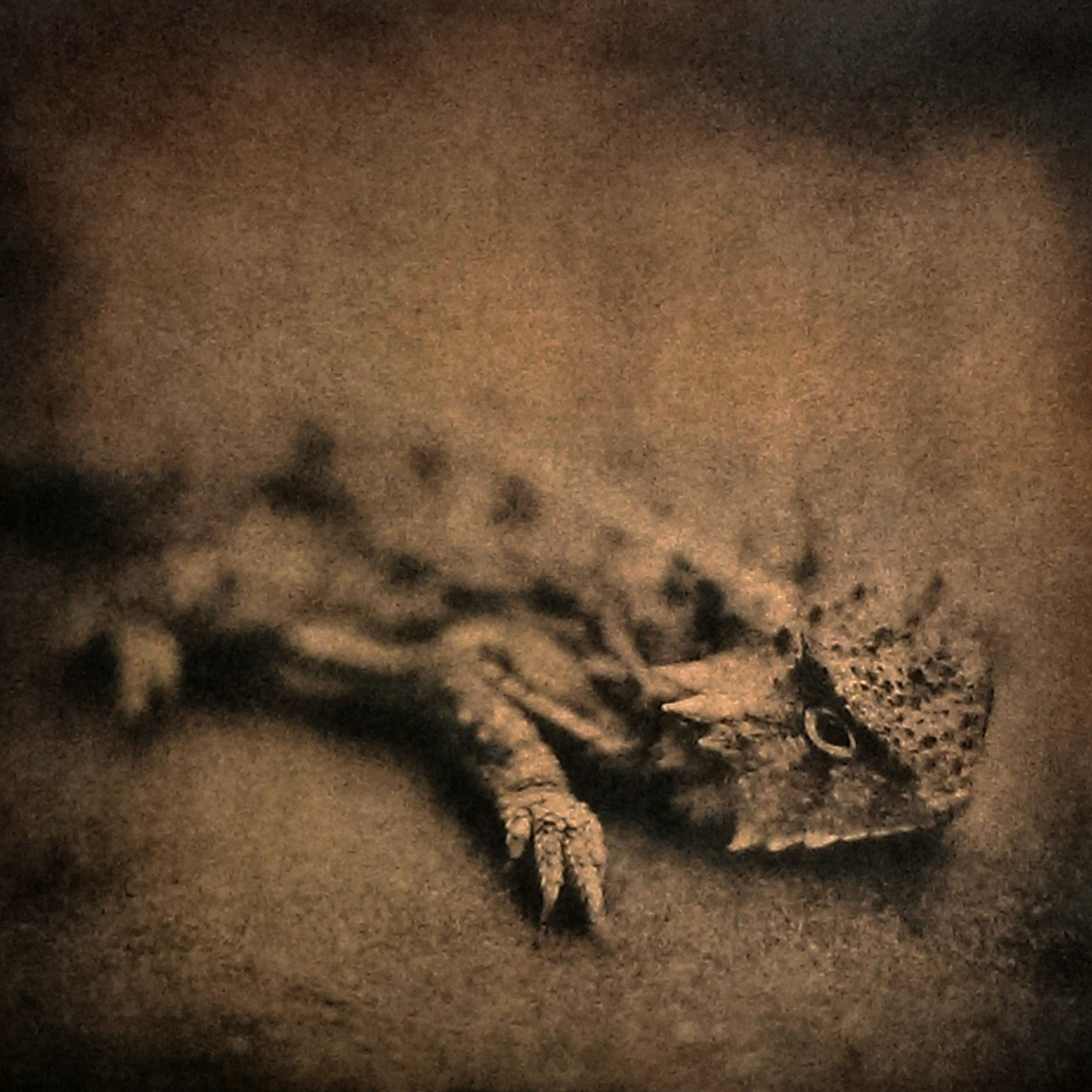 Horny Toad, 2014