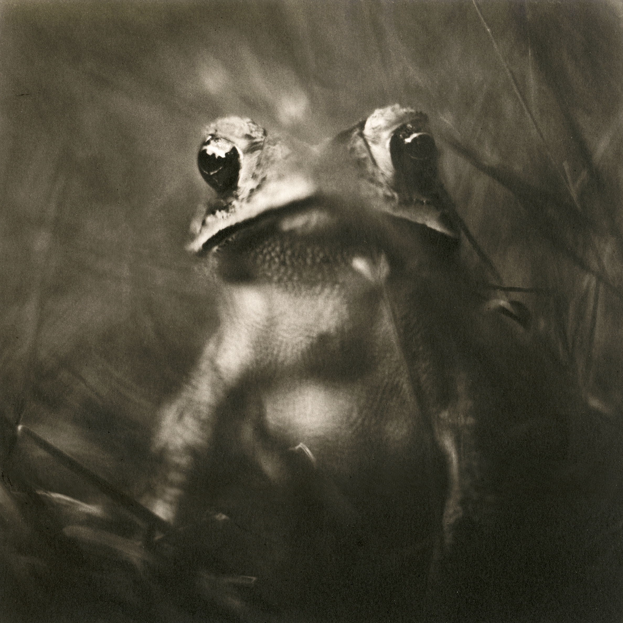 Toad, 2004
