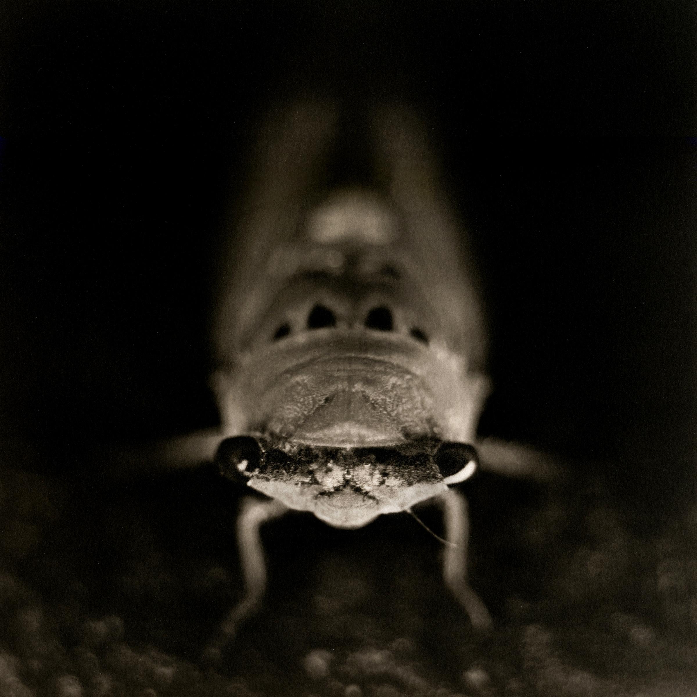Cicada, 2008