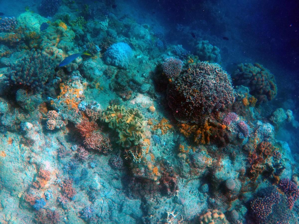 under_the_sea_deep_sea_fish_ocean_deep_aquatic_swim_underworld-1237492.jpg!d.jpeg