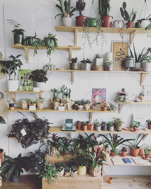 There's so much going on behind the scenes as I prepare to launch @we_are_starstuff. Amongst all the prep this week, I visited the MEGA inspirational @ngngdesign to buy some very sexy plants. This place, and it's vegan sister cafe, @exetersacredgrounds, just over the road, literally made me giddy with breathless excitement. Bringing home some plants for Starstuff feels like such good juju. NGNG is in its tenth (TENTH!) year and it's still leading the way for independent, creative businesses.  Hayley, the woman behind this amazing setup, was so warm and approachable; she was full of joy and enthusiasm and advice for both my shop and the plants I bought. This sweet camaraderie between shopkeepers is not something I had anticipated and really warms my heart!  Over the road at Sacred Grounds I stuffed my face with the outrageously good vegan savoury waffles. All in all, my 2-hour visit flew by far too quickly and I'm already planning my next trip for the Fore Street Flea next month.
