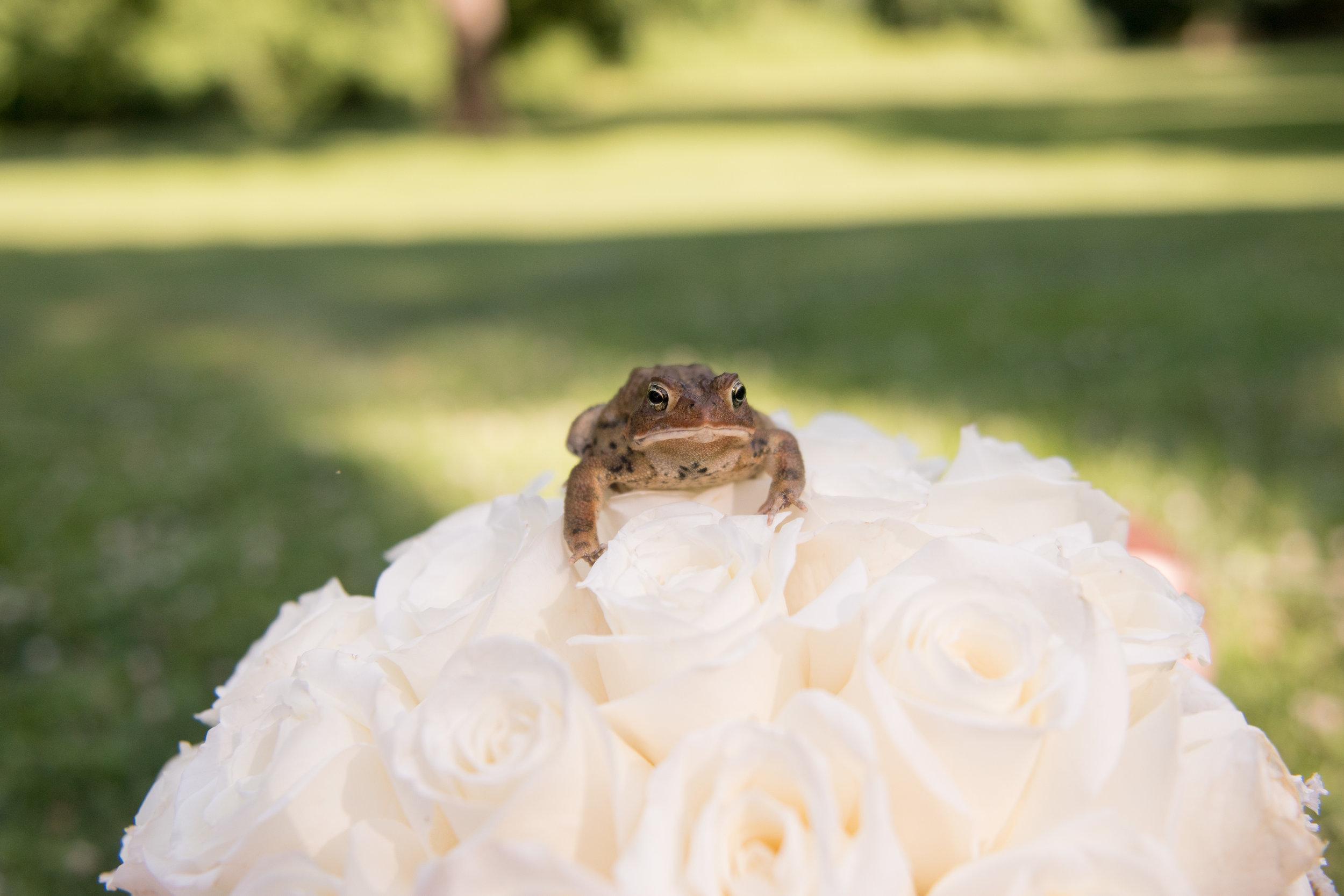 Meisenzahl Wedding - 384.jpg