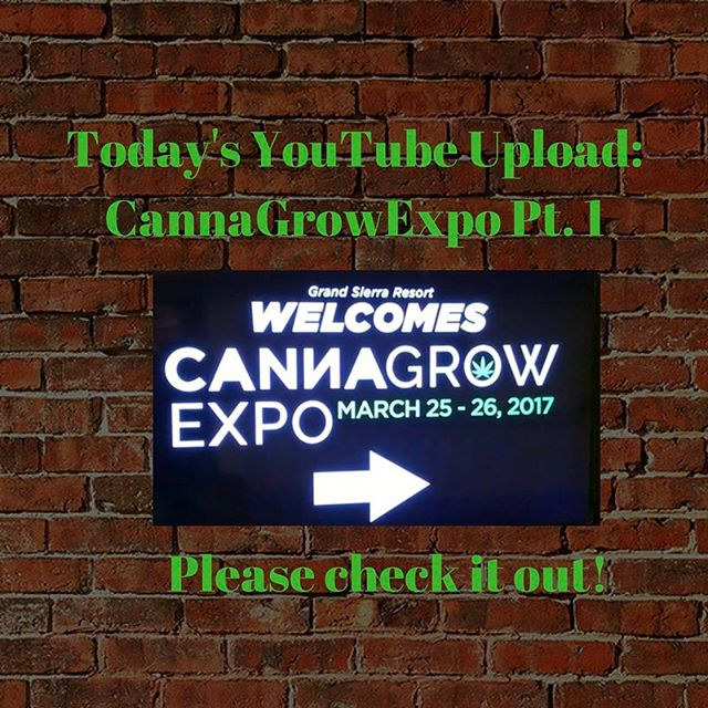 We chat with a number of vendors @cannagrowexpo Please check it out! @foliaressence @spectrum_king_led #calinutrientsandsoil @kelzyme_element_xx @shanecallanan