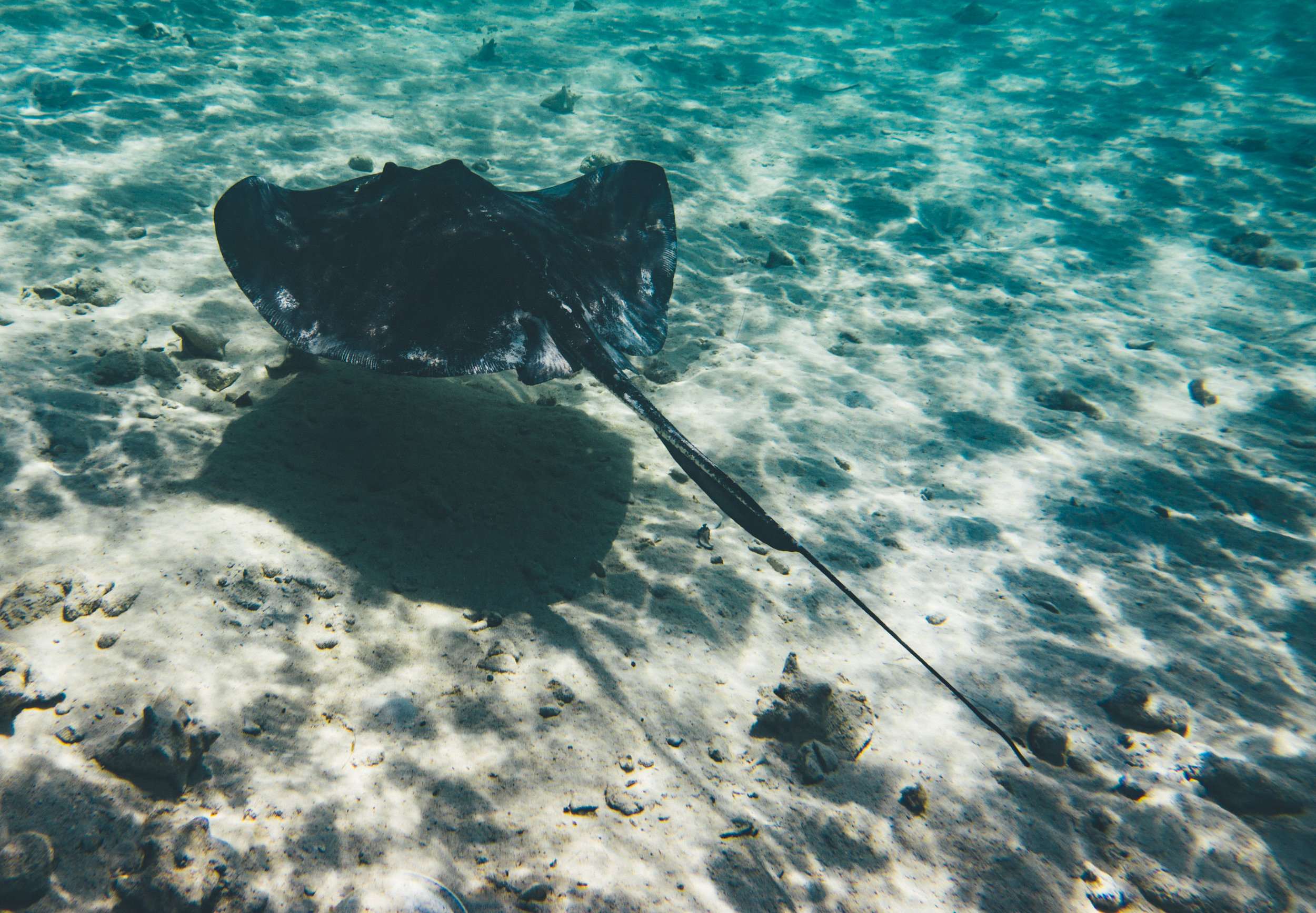 Stingray sighting just off the shore at our AirBnB