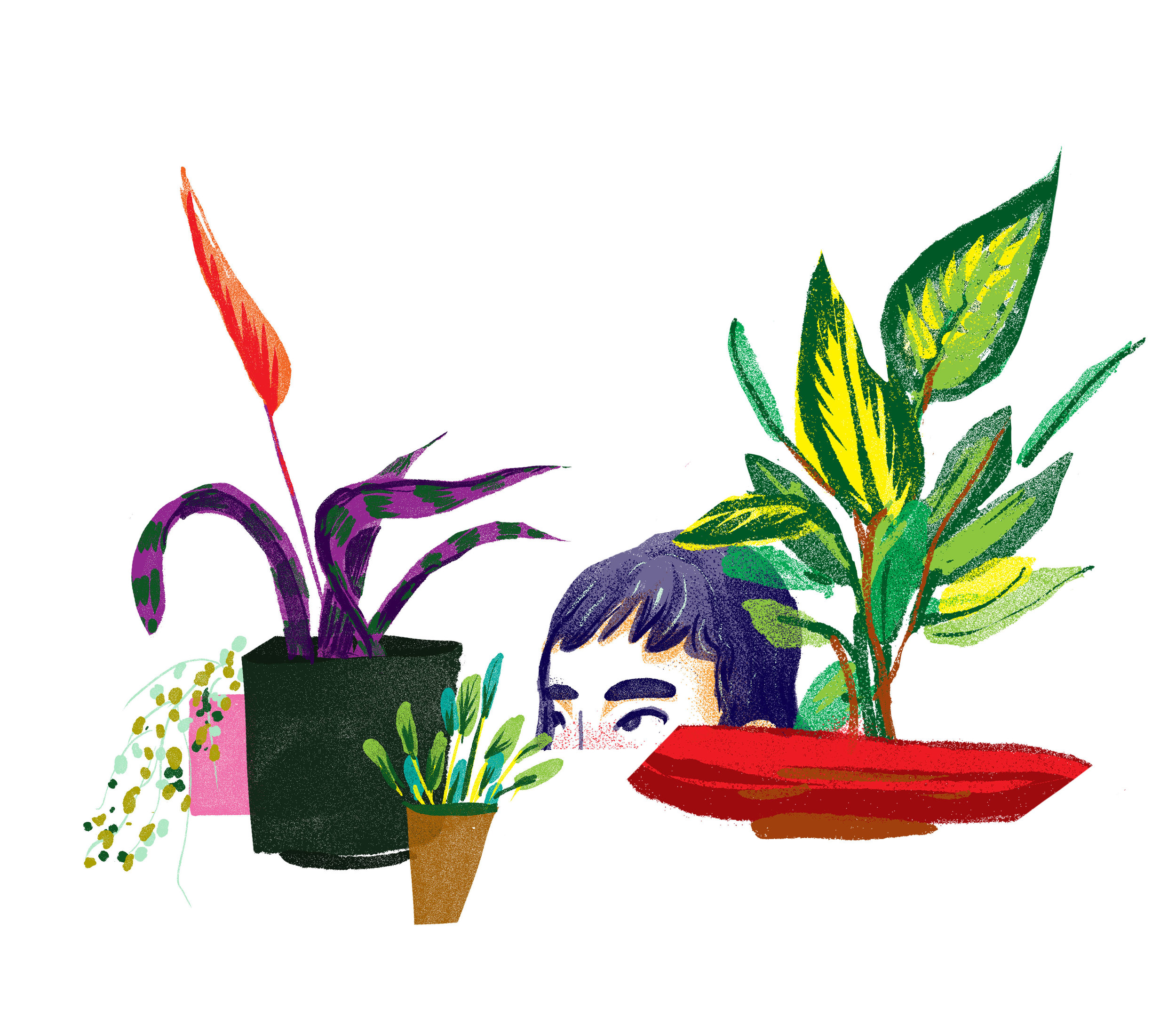 plantdotties.jpg
