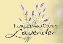 Prince Edward County Lavender Farm and Shop