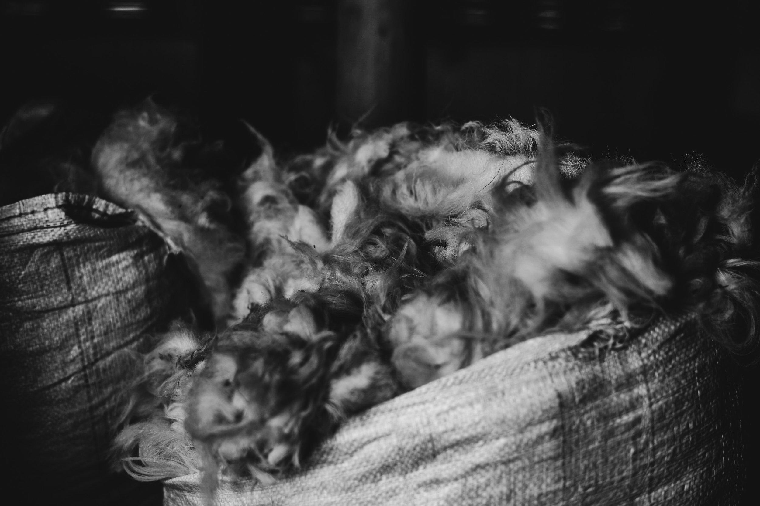 Sheep Wool Irish farm Toronto Lifestyle photographer
