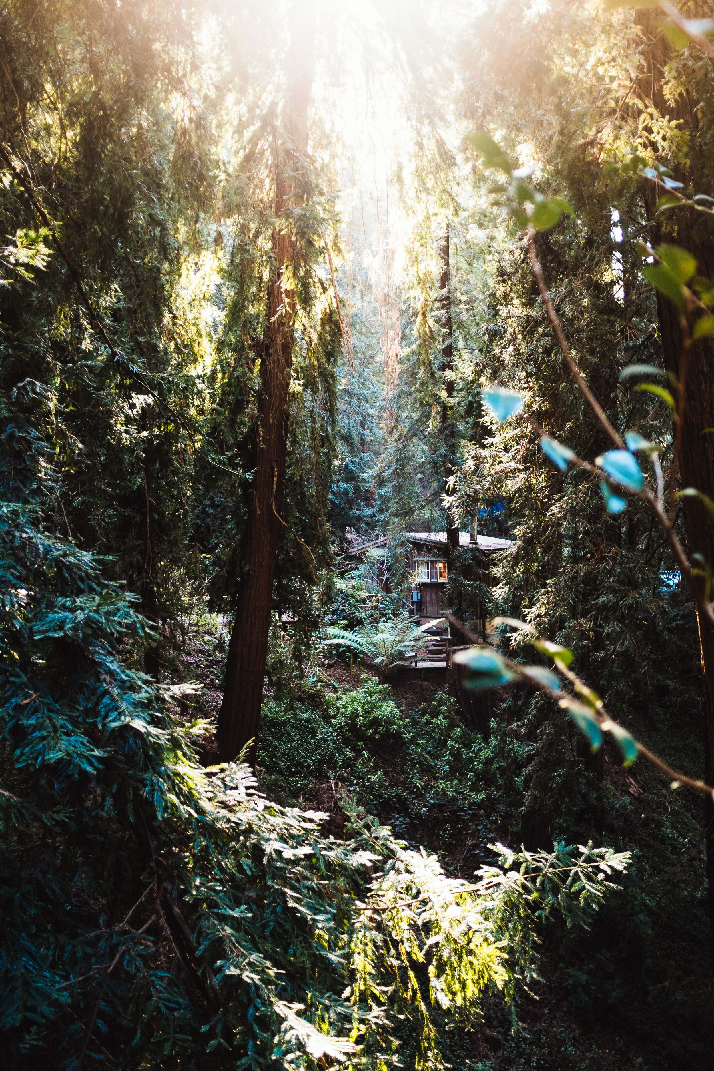 Deetjens Big Sur Inn Forest California Toronto Travel Photographers - Suech and Beck