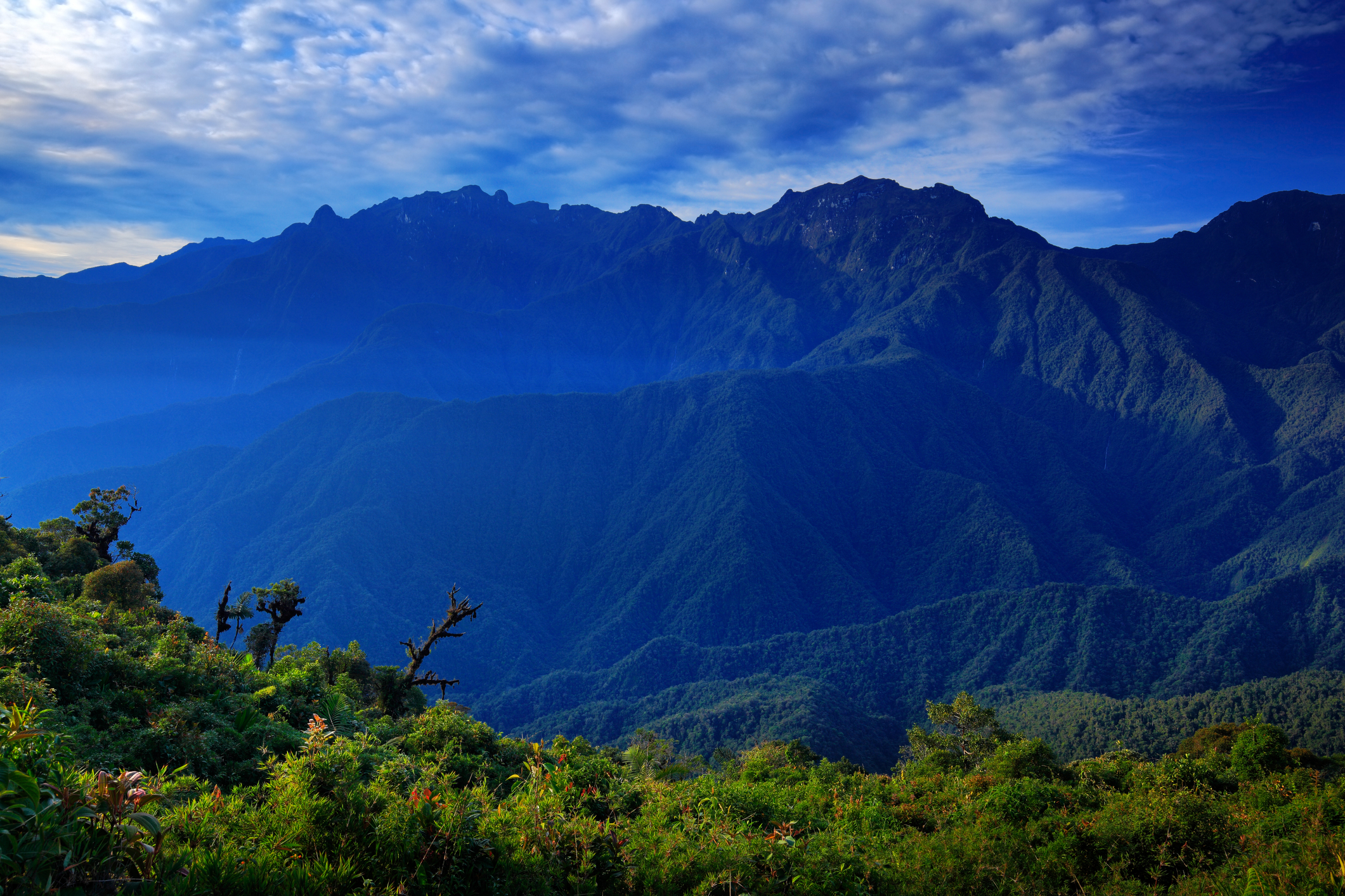 moutain-tropical-forest-with-blue-sky-and-clouds-tatama-national-park-high-andes-mountains-of-the-cordillera-colombia-67957505.jpg
