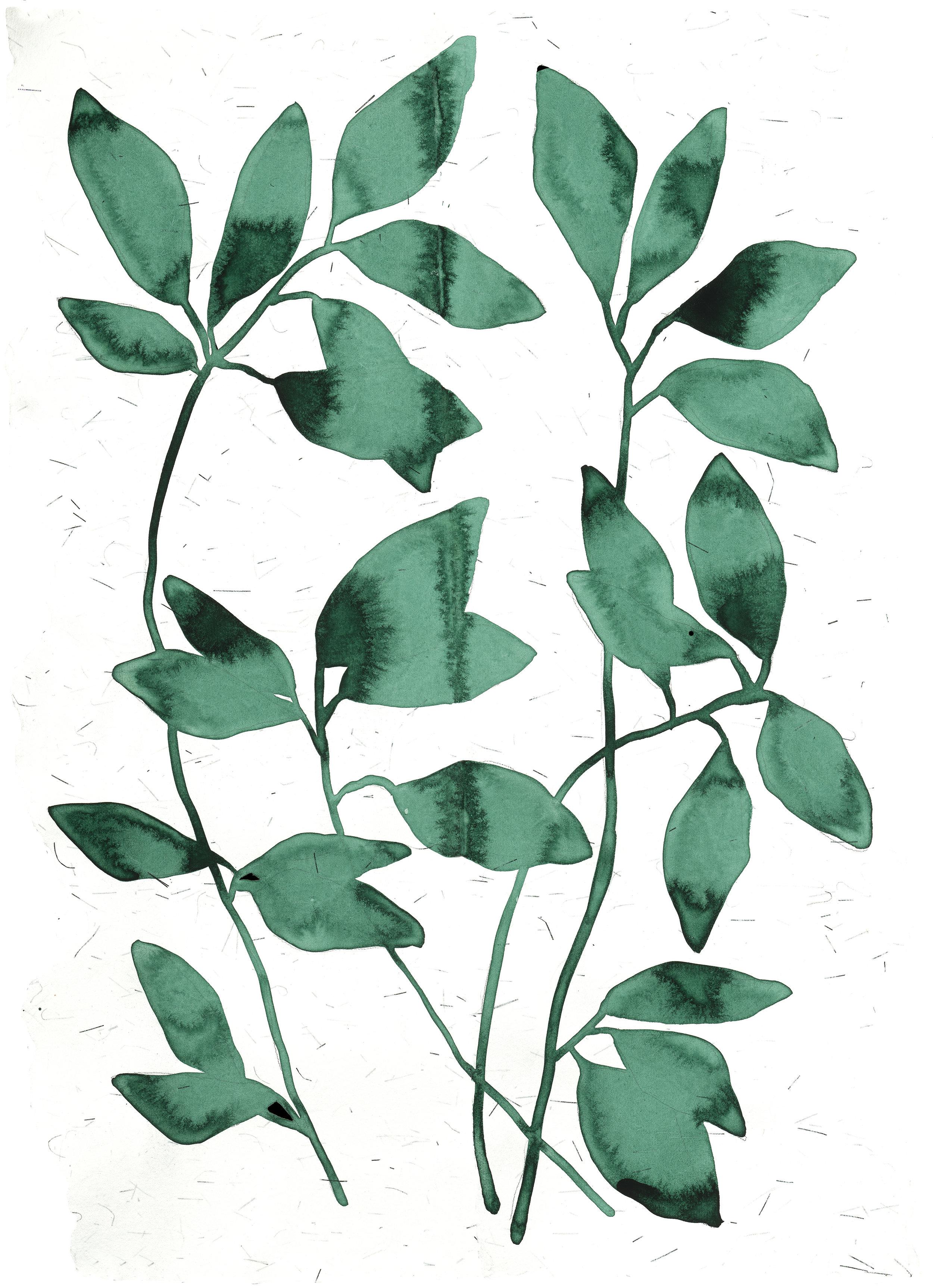 Emerald Branch Silver Fleck.jpg