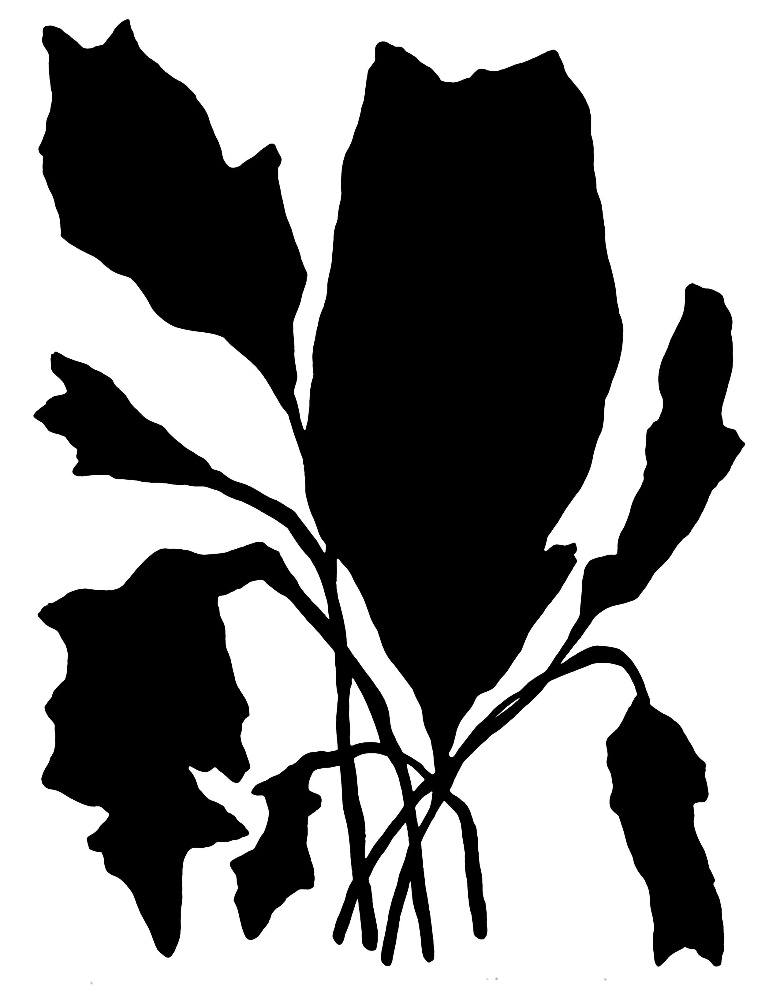 Leafy One.jpg