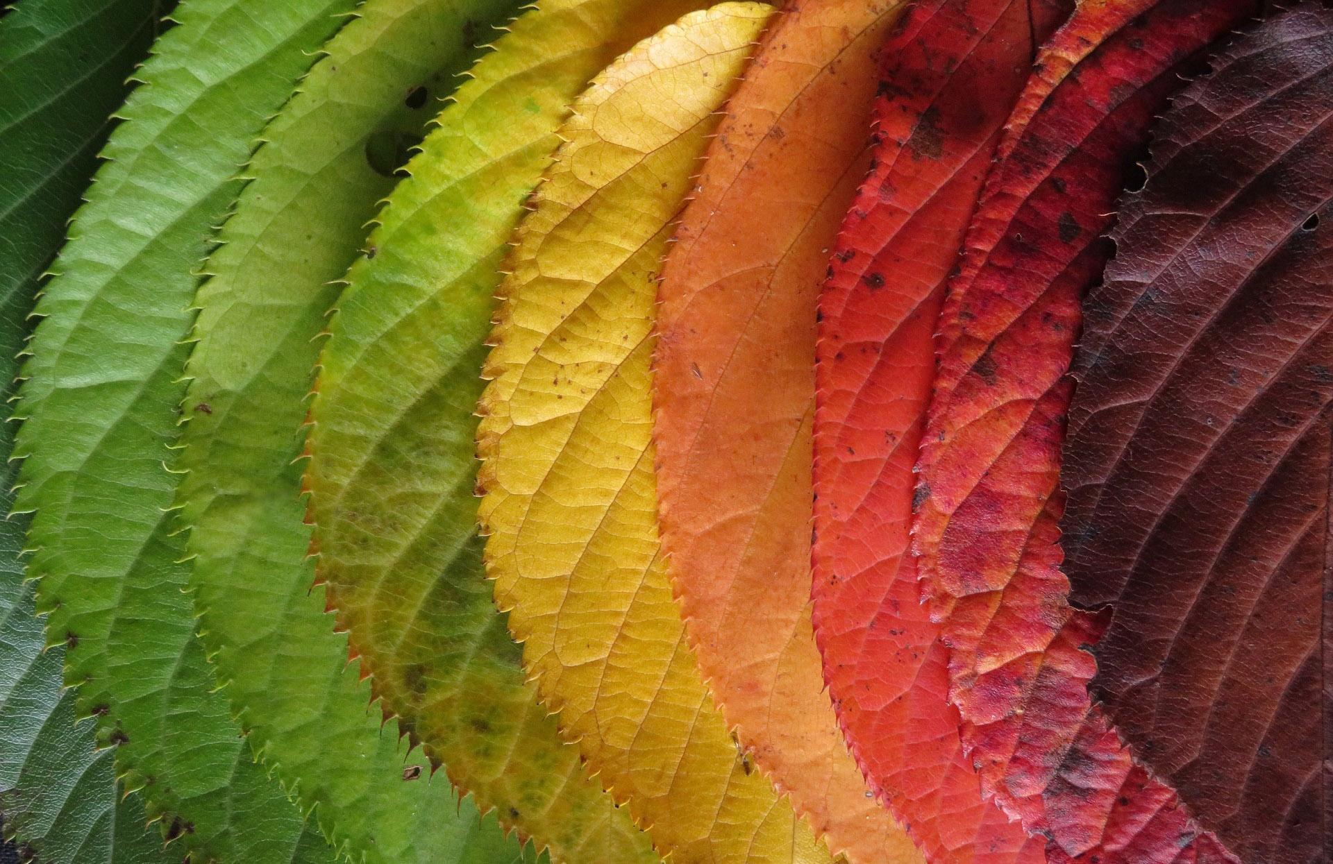 Flourish as a Change Catalyst