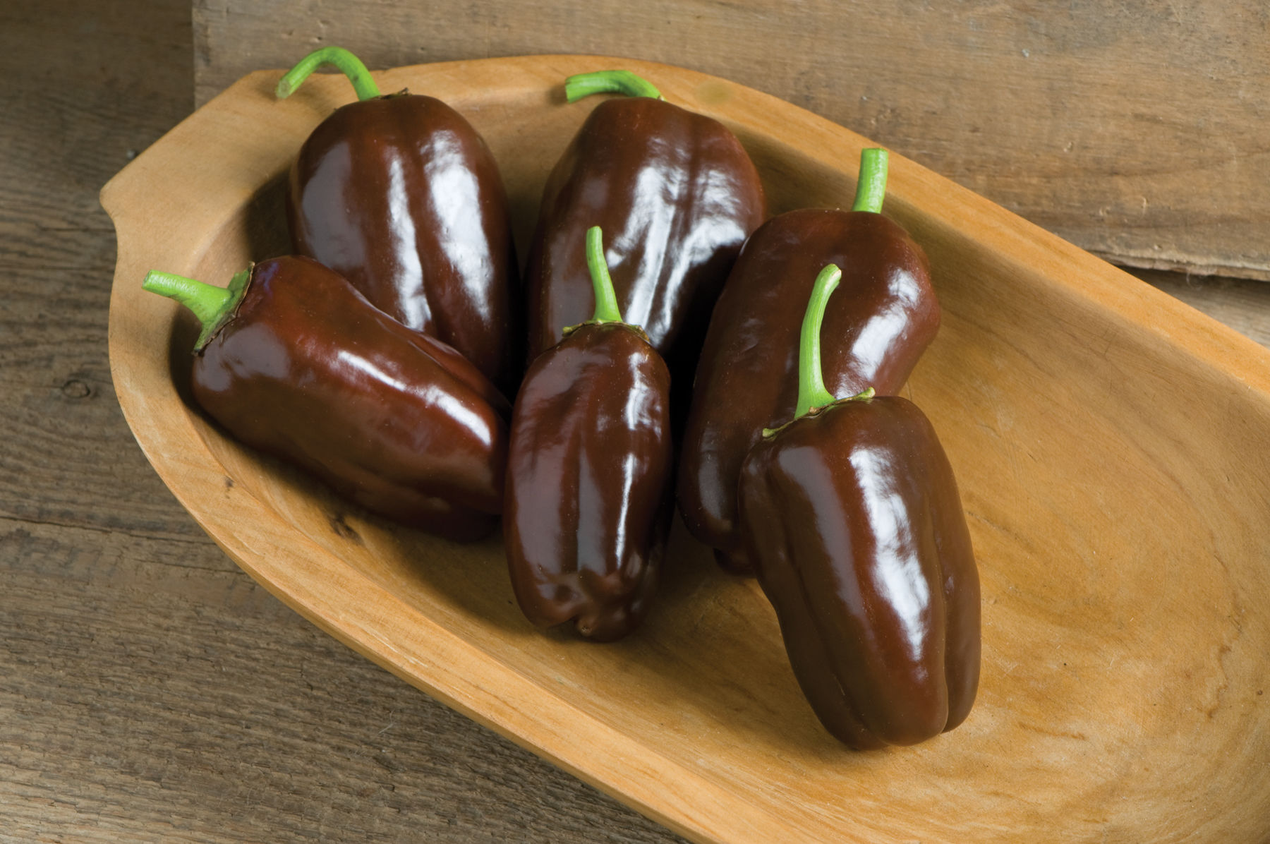 These are Sweet Chocolate Bell Peppers by Johnny's Selected Seeds. Johnny's is one of our favorite seed providers. Don't these look delicious?