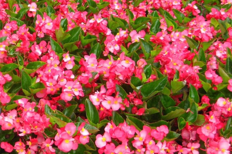 Rose w/green leaf -