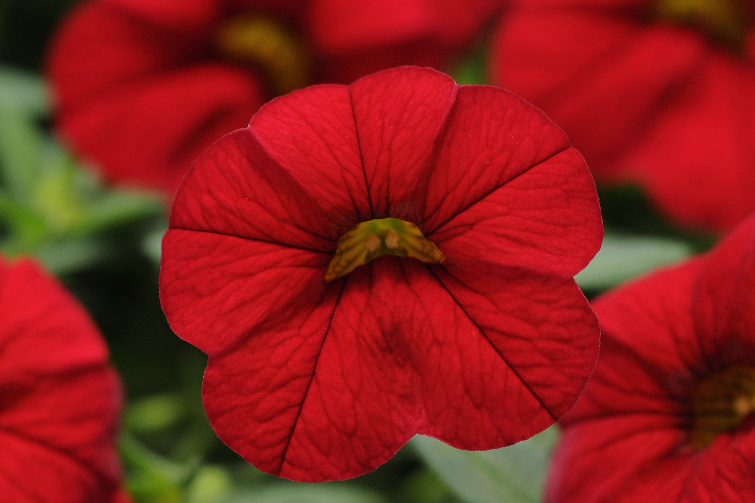Red Bright -