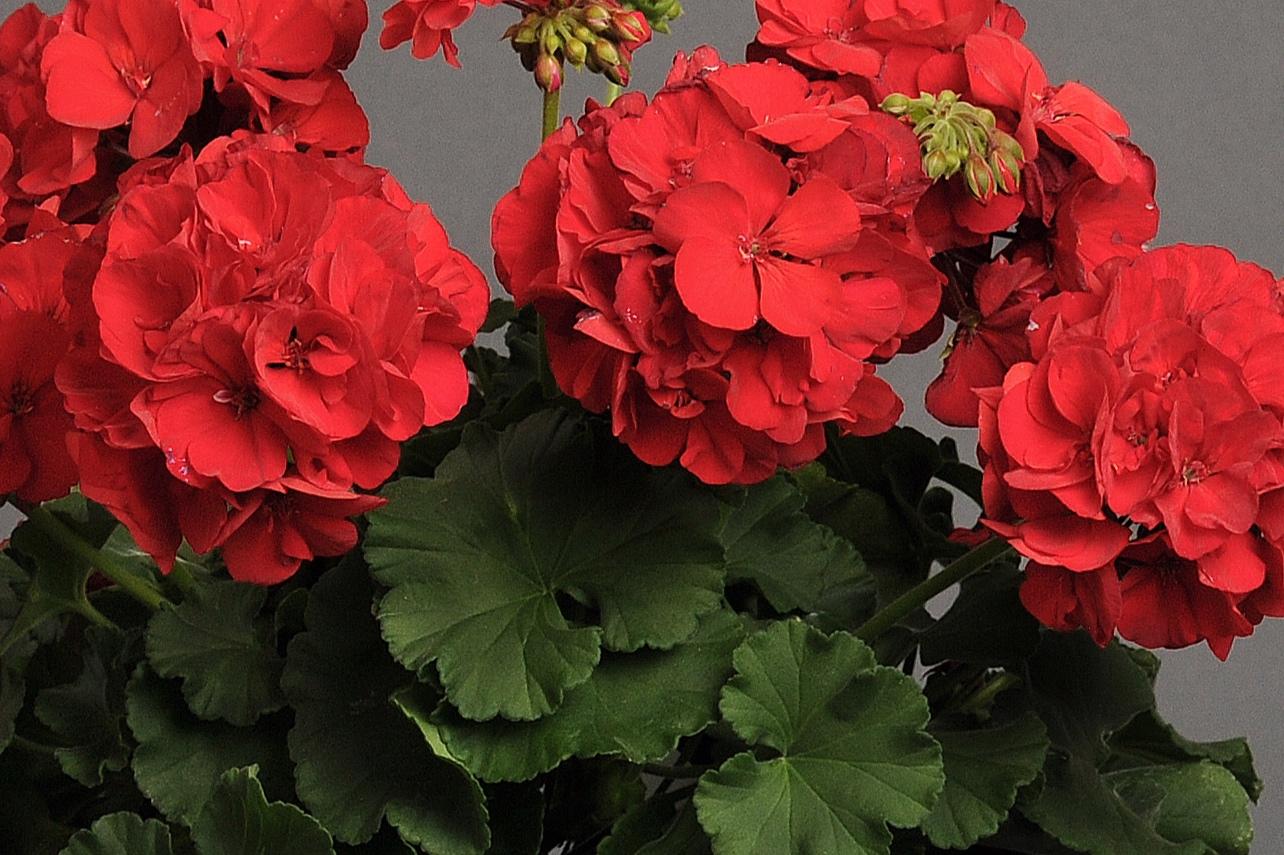 Red Dark -