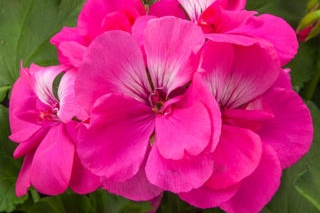 Pink Hot -
