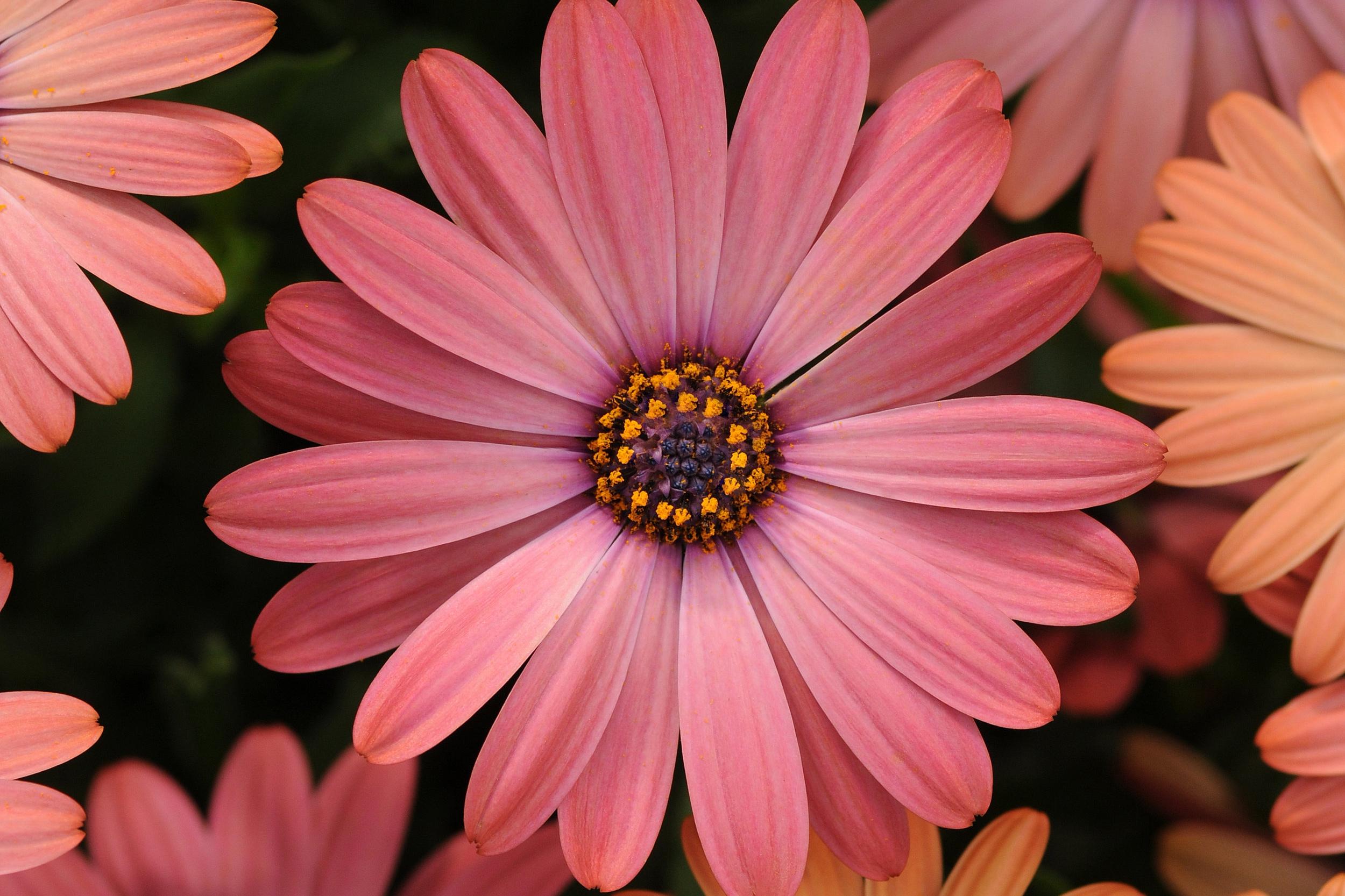 Rose Magic -