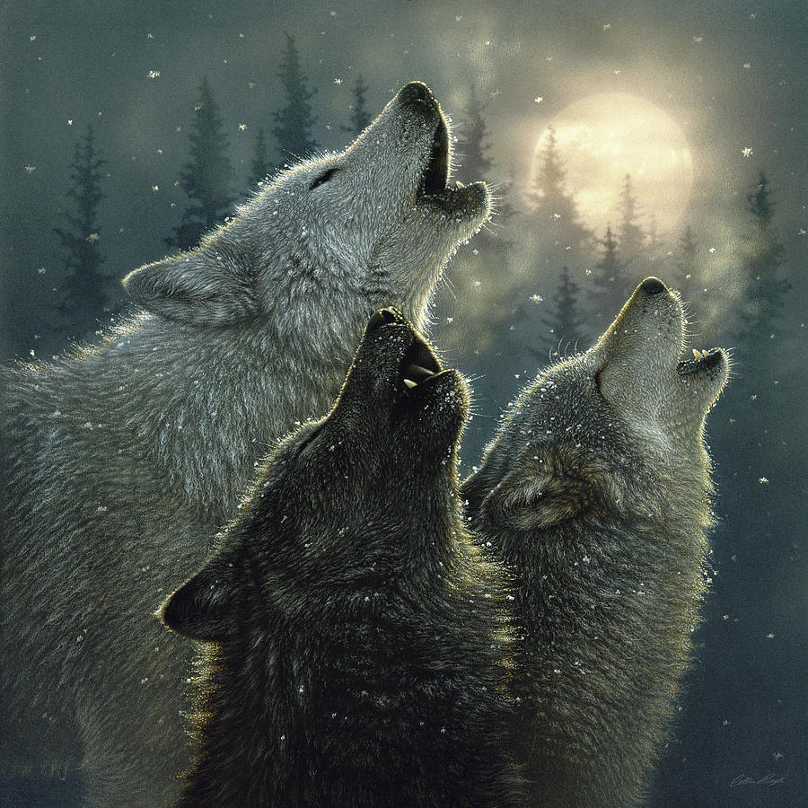 wolves-howling-moon-in-harmony-collin-bogle.jpg