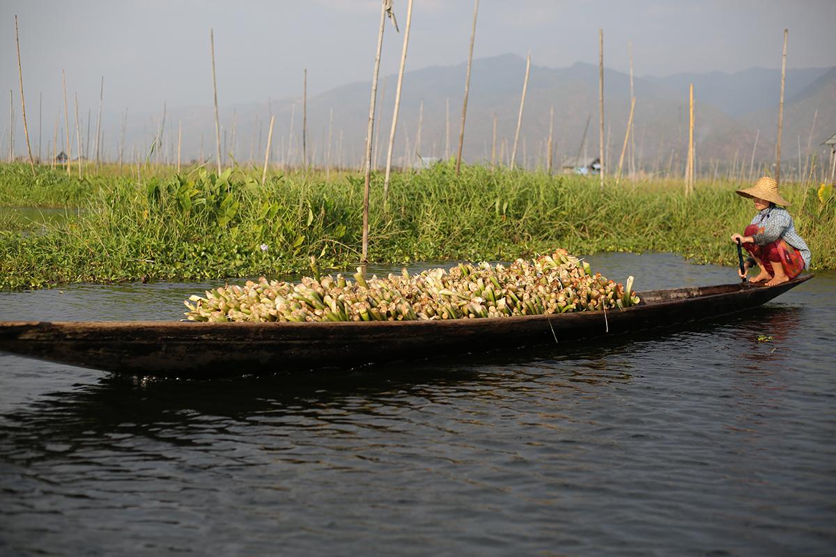 inle-bamboo.jpg