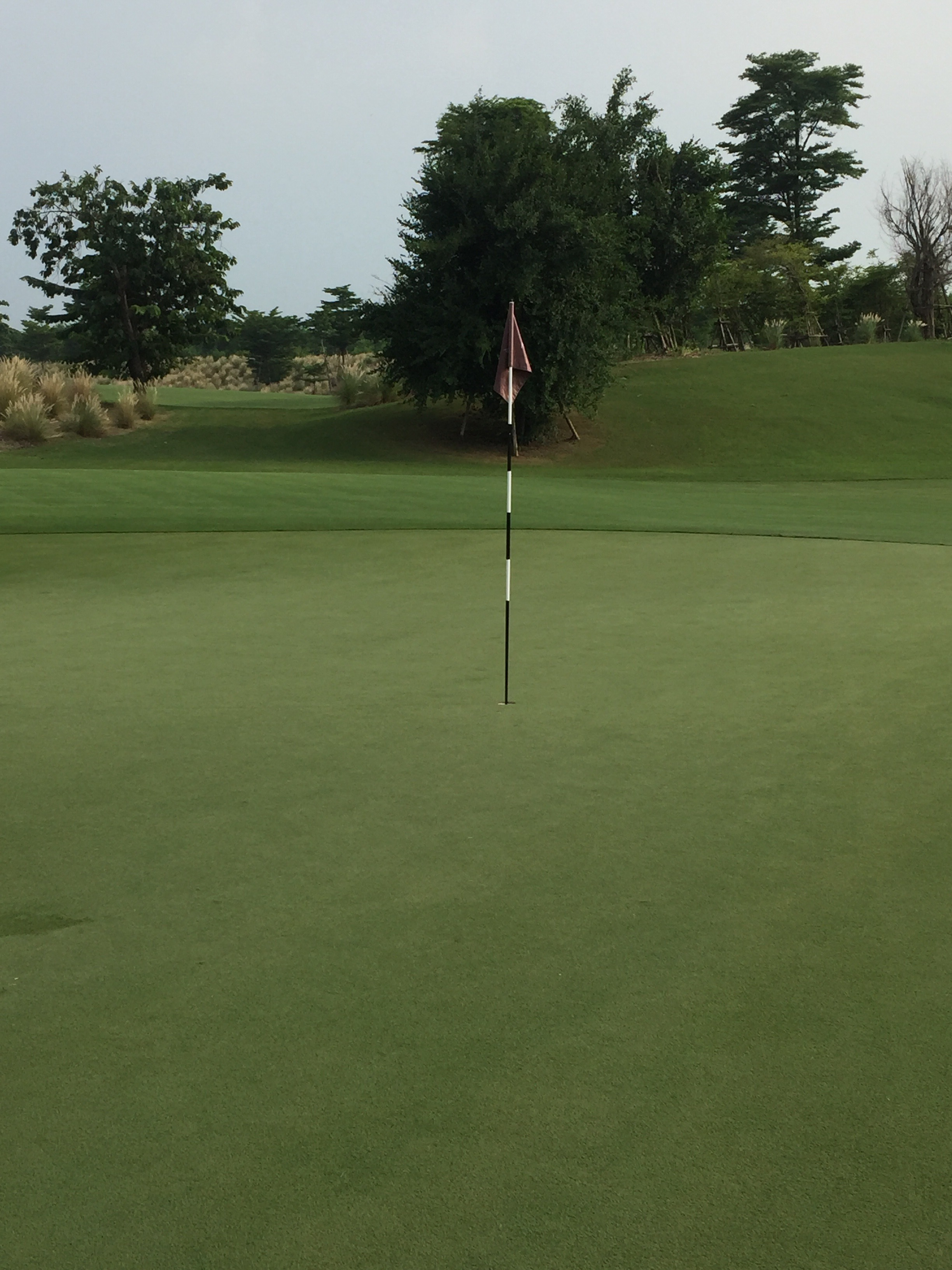 Greens are still in good shape with 3 months of no K, only applying N and P with a little Mg and Ca from irrigation