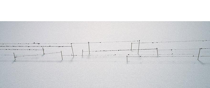 "<i>linear journey</i>, foam board, hair, sewing pin, h. 1 1/2"" x w. 16"" x d. 5"", 2006"