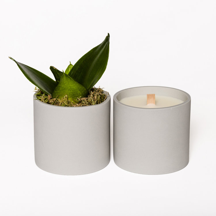 Lucky_Cloud_Skincare_Rainstorm_Candle_Plant_LR.jpg