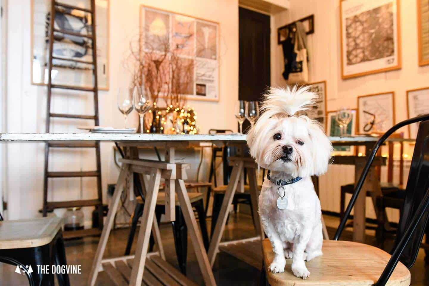 The-Best-of-Dog-friendly-St-Johns-by-Milo-the-Maltese-LOculto-2.jpg