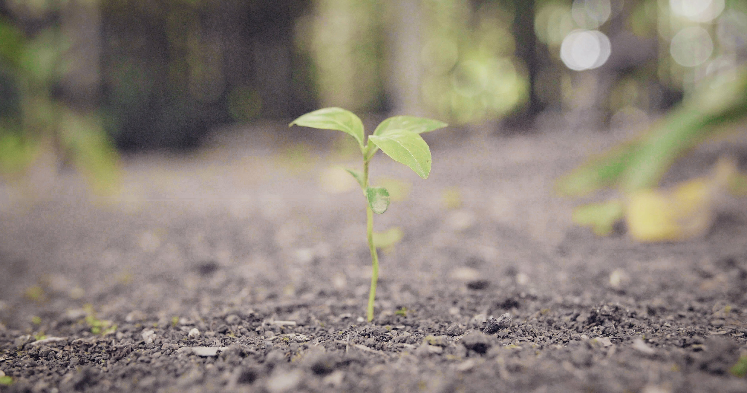 Plant growing in Terra Pretta, ancient man-made soil.