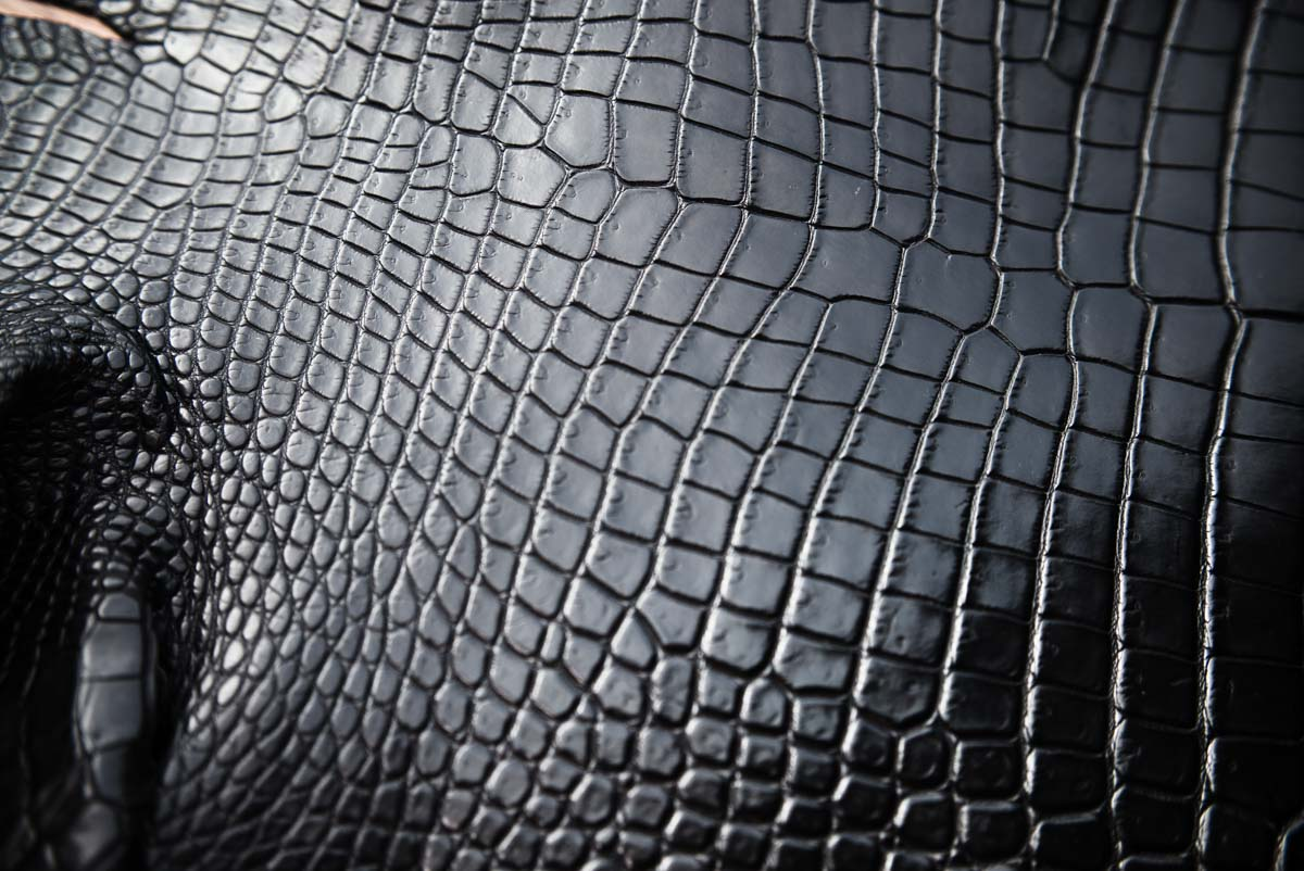 porosus-black.jpg