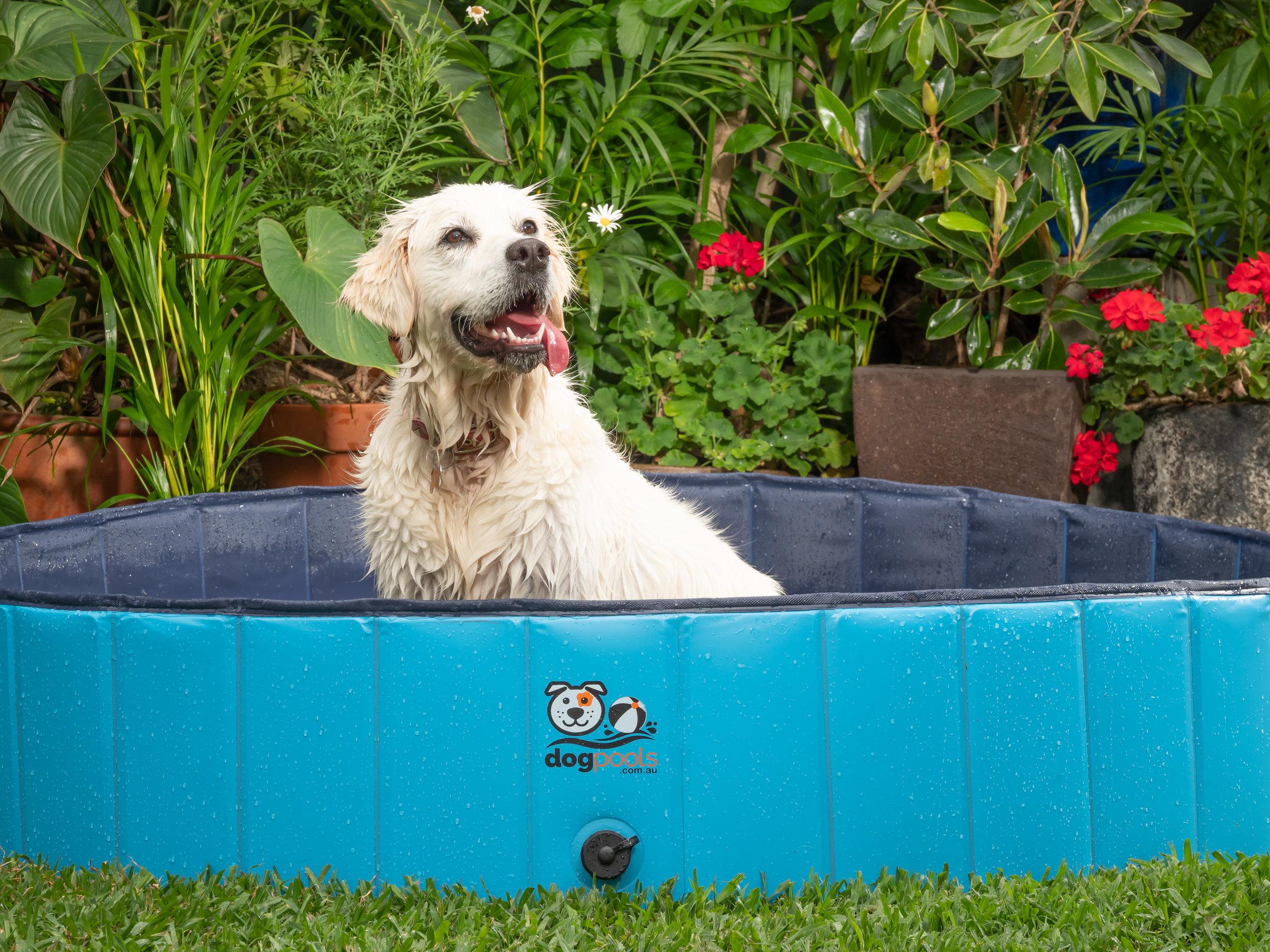 Dog Pool Miyu.jpg