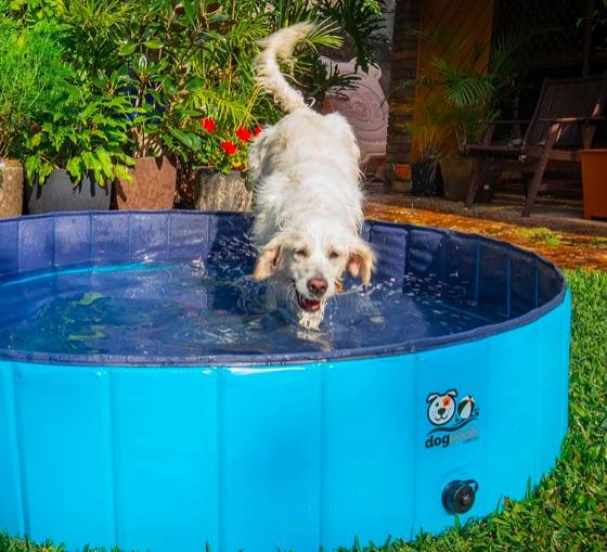 Miyu jumping into dog pool 2.jpg