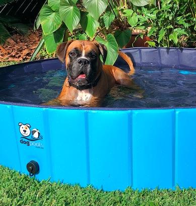 Louie in dog pool.jpg