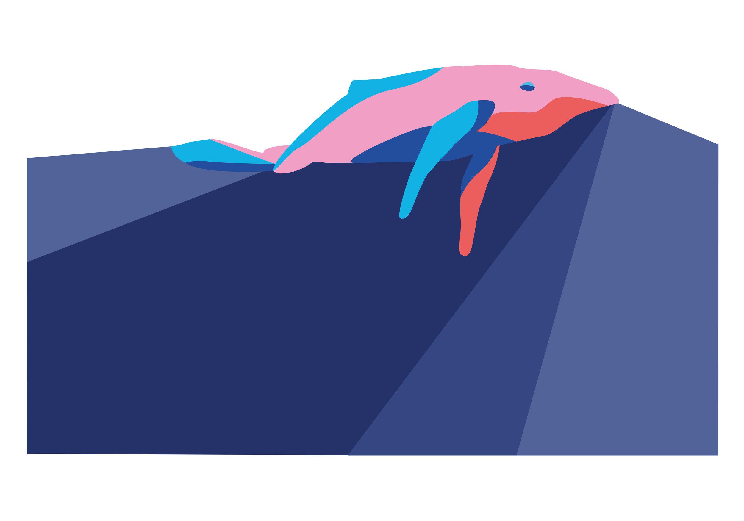 SF_Whale.jpg