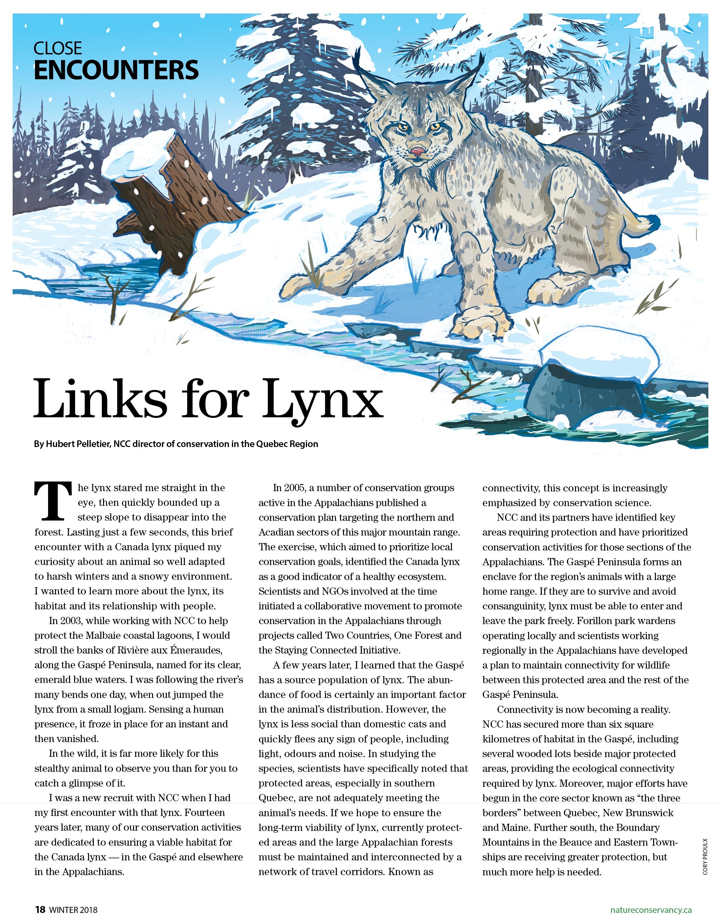 Lynxwebsite.jpg