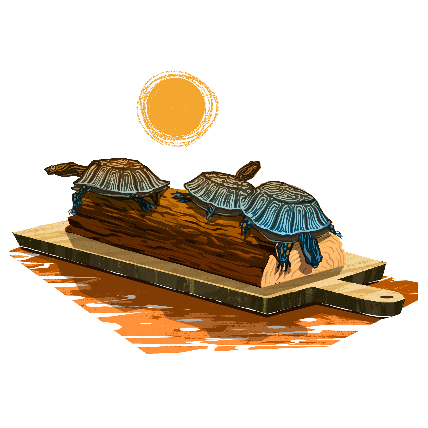 Spot - Sun Basking - Turtles are a cold-blooded species that conduct heat from objects they rest on while above the water. This is great source of vitamin D and other essential nutrients that help keep a healthy body and shell.