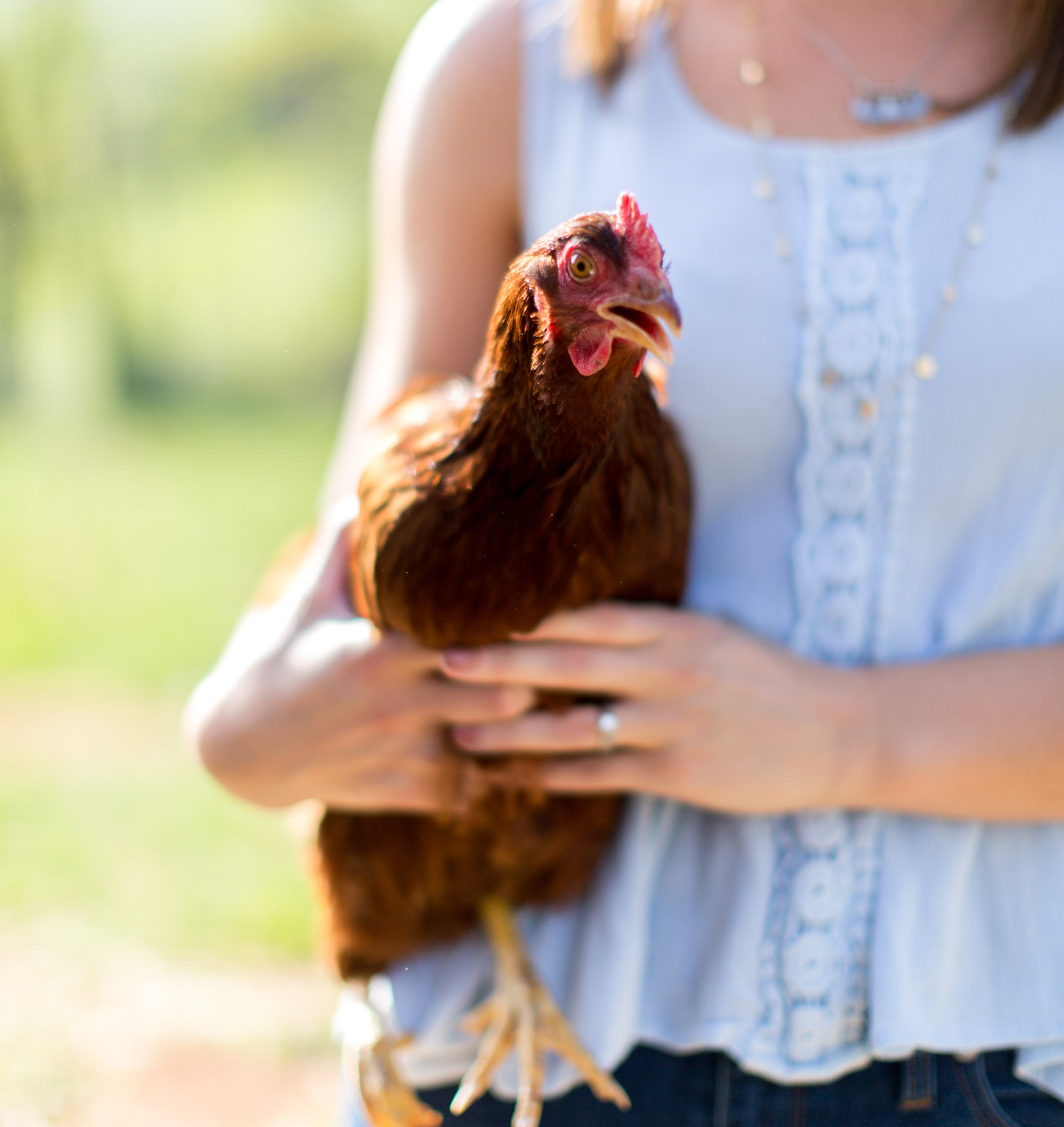 CHICKEN COOPPippin Hill Farm's Newest Residents -